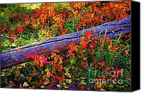 Forest Floor Canvas Prints - If the leaves are three Canvas Print by Jon Burch