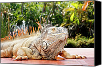 Mexico Canvas Prints - Iguana Canvas Print by Showing the world ..