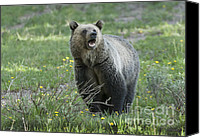 North American Wildlife Canvas Prints - Ill Only Say This Once Canvas Print by Sandra Bronstein