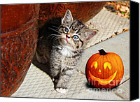 Kitten Greeting Card Digital Art Canvas Prints - Im So Cute Canvas Print by Vickie Emms