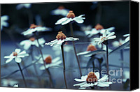 Joyful Canvas Prints - Imagine f03a Canvas Print by Variance Collections