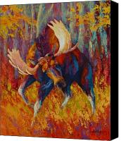 Moose Canvas Prints - Imminent Charge - Bull Moose Canvas Print by Marion Rose