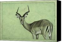 Nature  Canvas Prints - Impala Canvas Print by James W Johnson
