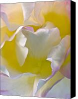 Flower Photos Canvas Prints - Impressions From Heaven I Canvas Print by Artecco Fine Art Photography - Photograph by Nadja Drieling