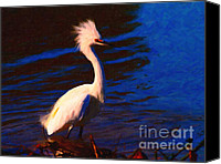 Snowy Egrets Canvas Prints - Impressions of a Snowy Egret . Painterly Canvas Print by Wingsdomain Art and Photography