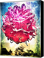Mobilephotography Canvas Prints - In Bloom Canvas Print by Jaclyn Dilling