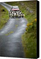 Urban Scenes Canvas Prints - In Irish Shepherd Herds His Flock Canvas Print by Pete Ryan