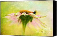 Cone Flowers Canvas Prints - In Perfect Harmony Canvas Print by Lois Bryan