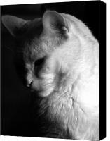 Feline  Canvas Prints - In the shadows Canvas Print by Bob Orsillo