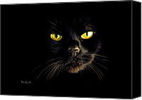 Spooky Photo Canvas Prints - In the shadows One Black Cat Canvas Print by Bob Orsillo
