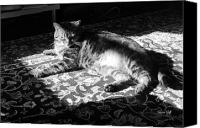 Critters Canvas Prints - In the Sunbeam in Black and White Canvas Print by Suzanne Gaff