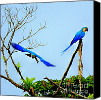 Talking Photo Canvas Prints - In the Wild Canvas Print by Karen Wiles