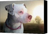 Dog Canvas Prints - In Thought Canvas Print by Michael Tompsett