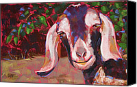 Goat Pastels Canvas Prints - In Yer Face Canvas Print by Mary McInnis