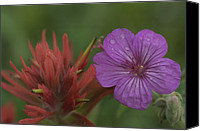 Wild Geranium Canvas Prints - Indian Paintbrush And Wild Geranium Canvas Print by Norbert Rosing