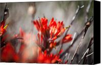 Sandoval Canvas Prints - Indian Paintbrush Canvas Print by Del Duncan