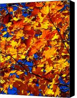 Blue Leaf Canvas Prints - Indian Summer ... Canvas Print by Juergen Weiss
