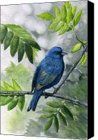 Bunting Painting Canvas Prints - Indigo Bunting Canvas Print by Mary Tuomi