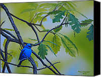 Bunting Painting Canvas Prints - Indigo Bunting Canvas Print by Ron Plaizier