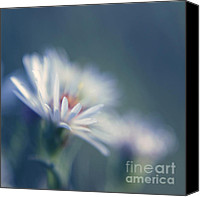 "\""painterly Photography\\\"" Photo Canvas Prints - Innocence - 03 Canvas Print by Variance Collections"