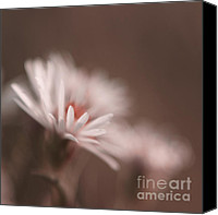 White Series Canvas Prints - Innocence - 05-01a Canvas Print by Variance Collections