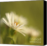 "\""painterly Photography\\\"" Photo Canvas Prints - Innocence - Original Canvas Print by Variance Collections"