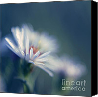 "\""painterly Photography\\\"" Photo Canvas Prints - Innocence 03b Canvas Print by Variance Collections"
