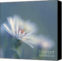 "\""painterly Photography\\\"" Photo Canvas Prints - Innocence 03c Canvas Print by Variance Collections"