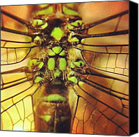 Dragonfly Canvas Prints - #insect #dragonfly #macro #iphoneonly Canvas Print by Aimee Junnila 