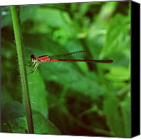Dragonfly Canvas Prints - #insect #dragonfly #nature Canvas Print by Sooonism Heng
