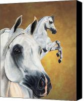 Arabian Horse Drawings Canvas Prints - Inspiration Canvas Print by Kristen Wesch