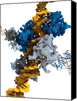 Interferon Canvas Prints - Interferon Regulatory Factor Molecule Canvas Print by Ramon Andrade 3dciencia