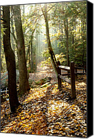 Autumn Photographs Canvas Prints - Into the Light Canvas Print by Greg Fortier