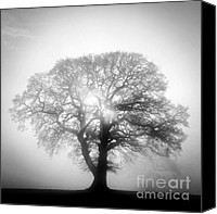 Potter Canvas Prints - Into The Light Canvas Print by John Potter