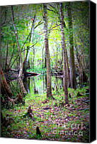 Cypress Knees Canvas Prints - Into the Swamp Canvas Print by Carol Groenen