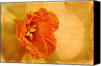 Daffodil Flowers Digital Art Canvas Prints - Inviting Canvas Print by Lois Bryan