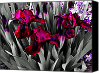 Selective Color Mixed Media Canvas Prints - Iris Family Canvas Print by Ms Judi