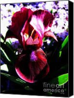 Selective Color Mixed Media Canvas Prints - Iris Inner Beauty Canvas Print by Ms Judi