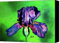 Grass Drawings Canvas Prints - Iris Canvas Print by Laura Bell
