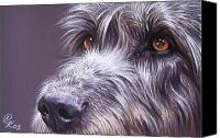 Dog Canvas Prints - Irish eyes Canvas Print by Elena Kolotusha