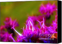 Judi Bagwell Canvas Prints - Ironweed Canvas Print by Judi Bagwell