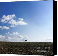 Ploughed Canvas Prints - Isolated tree Canvas Print by Bernard Jaubert