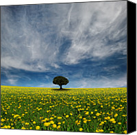 Solitude Canvas Prints - It  Dandelion World Canvas Print by Carlos Gotay