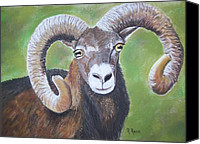 Goat Pastels Canvas Prints - Italian Muflan Canvas Print by Roberta Ress