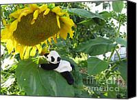 Baby Panda Canvas Prints - Its a BIG sunflower Canvas Print by Ausra Paulauskaite