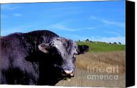 Rural Scenes Canvas Prints - Its A Bulls Life Canvas Print by Wingsdomain Art and Photography