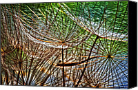 Tragopogon Dubius Scop Canvas Prints - Its a Jungle in There Canvas Print by Steve Harrington