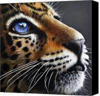 Cub Canvas Prints - Jaguar Cub Canvas Print by Jurek Zamoyski