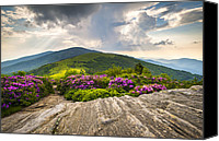 Appalachia Photo Canvas Prints - Jane Bald in Bloom - Roan Mountain Highlands Landscape Canvas Print by Dave Allen