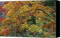 Photos Of Autumn Canvas Prints - Japan-60-13 Canvas Print by Craig Lovell